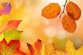 Escaparate de otoño en farmacia